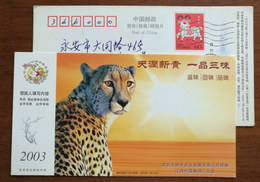 China 2003 Xingguo Cigarette Advertising Postal Stationery Card Felidae Animal Leopard - Felinos