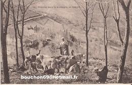 Afrique - Algérie - Chèvres Dans La Montagne En Kabylie Chevres Chevre Goat - Tizi Ouzou