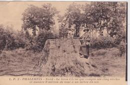 59 / PHALEMPIN / LE GROS CHENE - France