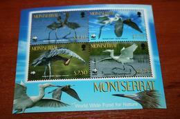 WWF  Montserrat  Rare Mini-block   Birds - W.W.F.