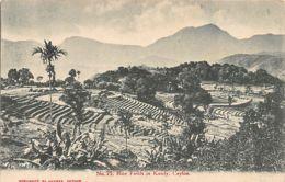 Sri Lanka - Ceylon - Rice Fields In Kandy - Publ. Colombo Apothecaries. - Sri Lanka (Ceylon)