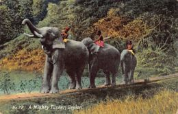 Sri Lanka - Ceylon - Elephants - A Mighty Tusker - Publ. Colombo Apothecaries. - Sri Lanka (Ceylon)