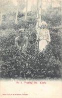 SRI LANKA - Kandy - Pruning Tea - Publ. S.D.H.M. Sadoon 2. - Sri Lanka (Ceylon)