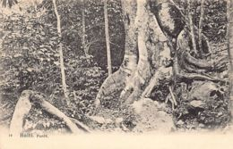Haïti - Forêt - Forest - Ed. Inconnu 19. - Haití