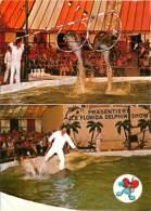 Parc D'Attractions - Europa Park - Delphin - Show - Dauphins - Allemagne - Bade-Wurtemberg - Rust - Voir Scans Recto-Ver - Deutschland