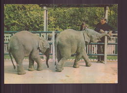 ZOO JEAN RICHARD JO CLAVEL APPIVOISE DEUX JEUNES ELEPHANTS - Éléphants