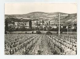 71 Saone Et Loire Azé Les Vignobles De Vin Vignes , Et Montagne D'aisne , 1967 - France