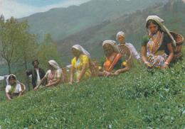 ASIE,ASIA,SRI LANKA,CEYLON,CEYLAN,COLONIE ANGLAISE,ILE SUD EST INDE,OCEAN INDIEN,recolte De Thé,tea - Sri Lanka (Ceylon)