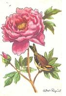 IMAGE DE PIVOINE DE CALVET-ROGNIAT - ET ROITELET OISEAU - - B. Plantes Fleuries & Fleurs
