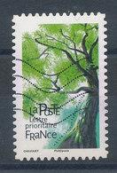 1616 (o) Arbre - Hêtre Commun - France