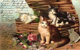 Katze, Katzen Im Korb, 1903 - Chats