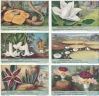 1536 Fleurs Geantes - REUZENBLOEMEN - Liebig Serie 6 Chromos  - Complete Liebig Serie - Liebig