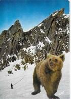 Midi Pyrénées - L'ours Des Pyrénées - Midi-Pyrénées