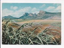 CP MAURICE MAURITIUS Plantation De Canne à Sucre Et Montagne De Pieter Both - Maurice