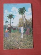 Cuba  Sugar Can Field    Ref 4006 - Cuba
