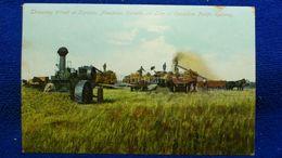 Threshing Wheat At Carmen Manitoba Canada - Other