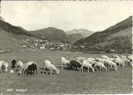 Splugen Fraz. Di Rheinwald (Grisons, Svizzera) Vue Et Paturage Des Moutons, Pecore Al Pascolo, View And Grazing Sheep - GR Grisons