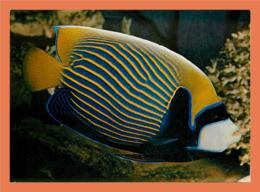 A288 / 245 54 - NANCY Aquarium Tropical - Poisson Ange De Mer Impérial - France