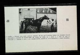 HARAS DU MONT EPINGUET à BRIX (Manche)  -  Présentation Pur Sang Anglais Alezan - Coupure De Presse (encadré Photo) 1926 - Equitazione