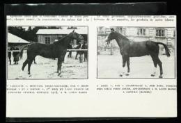 HARAS Louis Hardy (Saint Lo)   -  Présentation Pur Sang   - Coupure De Presse (encadré Photo) 1926 - Equitazione