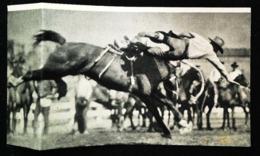 CALGARY (canada) - Rodéo Stampede Avec Cheval  - Coupure De Presse (encadré Photo) 1922 - Equitation