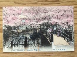 Japan ~ 1910, Hand Colored Postcard, Cherry Blossom At Nakagawa, Nagasaki, Unused - Sonstige