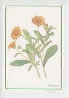 Calendula Ou Souci - Solsequia Qui Suit Le Soleil (collection Yves Rocher) Cp Vierge - Medicinal Plants