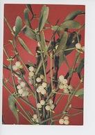 Mistletoe (viscum Album) Plante Qui Guérit Tous Les Maux (J. Arthur Dixon, Cp Vierge) - Medicinal Plants