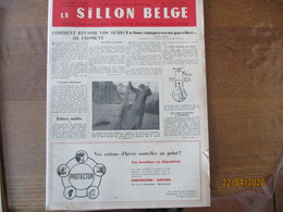 LE SILLON BELGE DU 1er OCTOBRE 1955 AVEC LES TAUREAUX QUI ONT PROFITE DE LA LIBERTE ET DE LA PAIX,LE CHEVAL DE TRAIT BE - Animals