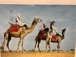 Pub Plasmarine.  Du Pôle Nord Au Pôle Sud SAHARA ESPAGNOL Méharistes  + Timbres - Westsahara