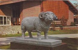 ETATS-UNIS - USA - RHODE ISLAND - UNIVERSITY OF Rhode Island KINGSTON - STATUE DE BELIER - Etats-Unis