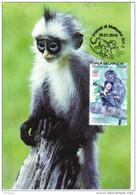30C:Carte Maximum Year Of Monkey,silver Leaf Monkey Maximum Card,Maxicard,MC - Monkeys