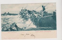 Isola Piana (Sardegna - SU) , Pesca Del Tonno , Super Animata  - F.p. - Fine '1800-inizi '1900 - Italië