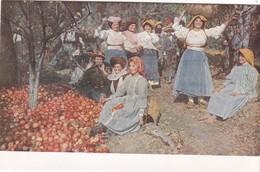 CORFOU - Récolte De Pommes - Grecia