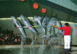 ZOO Duisburg, Germany - Dolphin - Duisburg