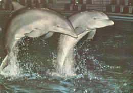 Hagenbeck Tierpark Hamburg, Germany - Dolphin - Stellingen