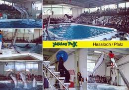 Holiday Park Hassloch, Germany - Dolphin, Sea Lion - Bad Dürkheim