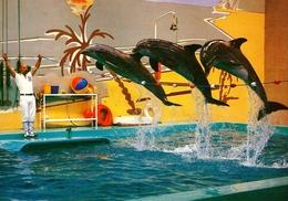 Phantasialand, Germany - Dolphin - Köln