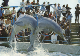 Safari-ZOO Mallorca, Spain - Dolphin - Mallorca