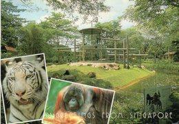 Singapour / Singapore Zoo - Views ( Dim 12x17 Cm) - Singapore