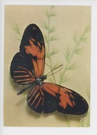 Papillon - Héliconius Vola (guyane) Papillons Exotiques N°10 Yvon - Insectes