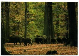 Arnsberg-Vosswinkel - Naturlebnis Wildwald - Arnsberg