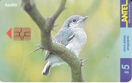 Nº 126 (CHIP ROJO) TARJETA DE UN PAJARO DE URUGUAY AZULITO (BIRD) - Uruguay