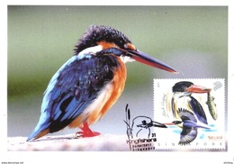 30H : CM, Carte Maximum Card, Singapore Kingfisher Maxicard,mc - Birds