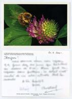 Abeille Du Domaine Apicole De Chezelles Butinant Un Trèfle Violet Du Berry. CP Utilisée. Série Limitée. - Insetti