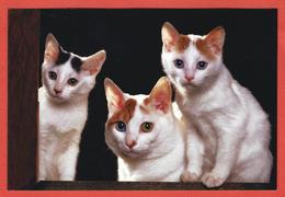China, Cina, Chine; Gatti, Cat, Kittens, Chats, Katzen, Postal Stationery, Intero Postale, Prepaid Postcard - Gatti