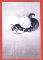 China, Cina, Chine; Gatti, Cat, Kittens Sleep, Chats, Postal Stationery, Intero Postale, Prepaid Postcard. - Gatti