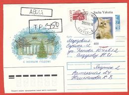Sacha-URSS 1998; Persian Cat, Gatto Persiano + Increase Russia, Busta Viaggiata, Traveled. - Gatti