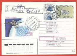 Dagestan-Russia 1998; Felis Silvestris + Increase Russia, Busta Viaggiata, Traveled. - Gatti