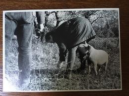 003 ESPECE DE MAUVAISE LANGUE COCHON LA VIE EN NOIR ET BLANC PHOTOGRAPHE NESPOULOS - Illustratori & Fotografie